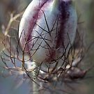 Nigella Pod by Leslie Guinan