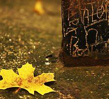 Autumn 14 by Dominika Aniola