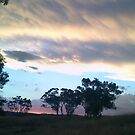 Cootamundra Sunset by Joan Wild