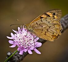 Common Brown by Barb Leopold