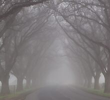 Road of Misty Trees by judith26
