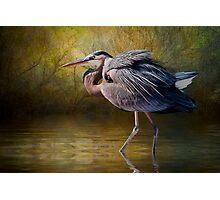 Heron Creek Photographic Print