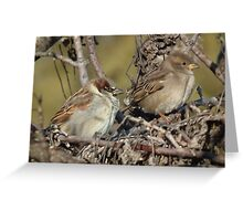 House Sparrow - Male and Female Greeting Card