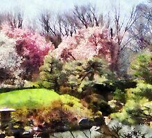Japanese Spring by Susan Savad