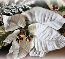 White Poinsettia by WeeZie
