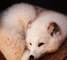 Arctic Fox by Crystal Philbrook