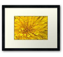 Flower - Dandelion Framed Print