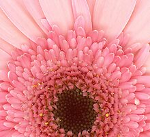 Flower - I LOVE Pink by Mike  Savad