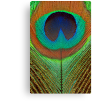 Animal - Bird - Peacock Feather Canvas Print