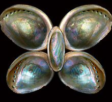 Shell - Conchology - Devine Pearlescence by Mike  Savad