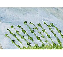 Impression Shore Seaweeds Photographic Print