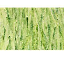Impression Seaweed Photographic Print