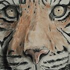Tiger up close! Tinted charcoal by gogston