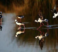 Evening Waders 2 by byronbackyard