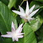 Botanic Flower - Singapore by Shoots