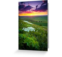 Palouse Flowers Greeting Card