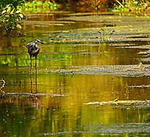 heron in the swamp by Manon Boily