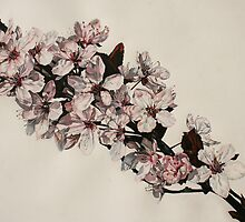 Cherry Blossom at Griddleshay by samcannonart