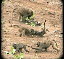 Playful baboons  by Catherine Ames