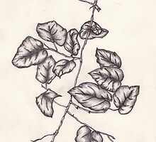Drawing - leaf stem by KarenJI1962