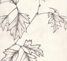Drawing - Grape Ivy leaf stem by KarenJI1962