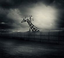 .zoo. by Michal Giedrojc