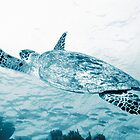Green Turtle Swimming by Andrew Bret Wallis