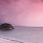 Gili T Tree by Anthony Evans