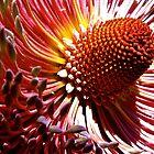 Australian flowers #1 by Kip Stewart