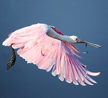 Roseate Spoonbill In Flight At Water's Surface by Kathy Baccari