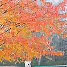 Autumn Tree by photodivaanna