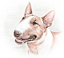 Bull Terrier by Marcia Rubin