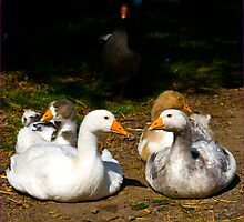 Gerty Goose and friends by J-images
