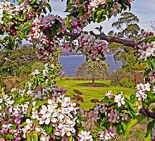 I'll be with you in Apple Blossom Time by TonyCrehan