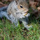 Baby Squirrel 001 by JulesPi