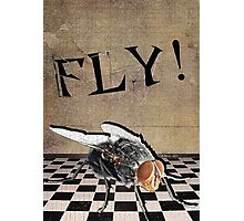 An Urge to Fly! Photographic Print