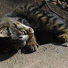Silly Kitty by WildestArt