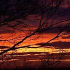 bonnie winter sunset no.1 by Babz Runcie