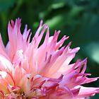 Beautiful Pink Flowers in the Garden by Nigel Cummings