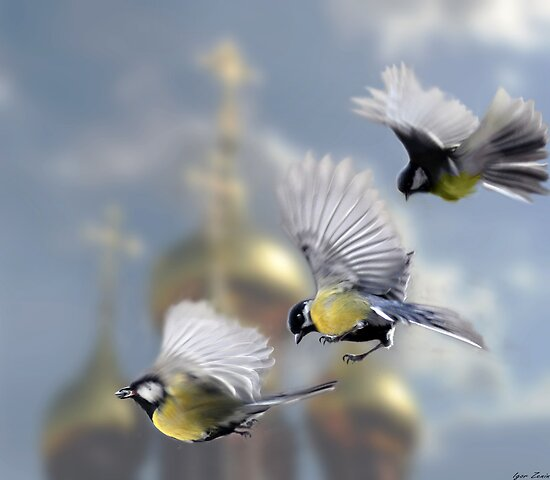 Chickadees by Igor Zenin