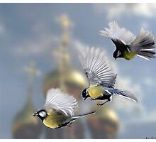Chickadees Photographic Print