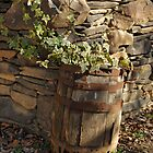 Barrel of Ivy by CathyS