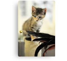 Playing Kitten Canvas Print