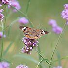 Common Buckeye on Verbena Flower by Robert E. Alter / Reflections of Infinity, LLC