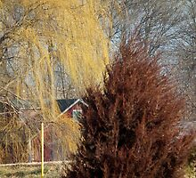 Yellow Willow, Red Pine by Deb Fedeler
