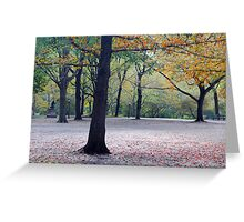 Old beech trees in autumnal park  Greeting Card