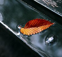 Autumn yellow-red leaf with drops in the rain on the bench by Anton Oparin