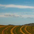 Gulgong Field, January. by Bill  Russo