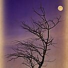 Bare Tree and Full Moon by ladygarbanzo