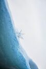 Snow Star (Portrait) by Andrew Bret Wallis